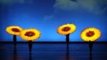 Botanica-SunFlowers.jpg