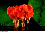 Bothanica-Marigolds.jpg